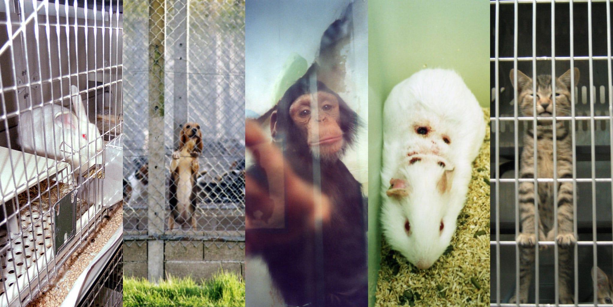 Visuel Expérimentation Animale